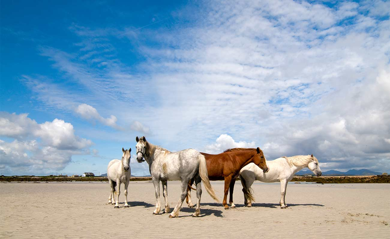 mustang horses making a comeback