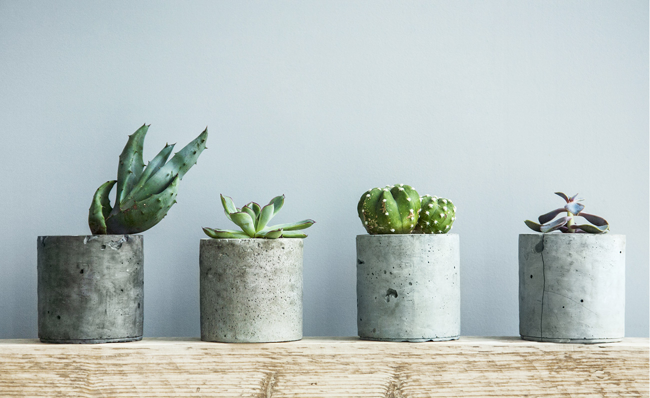 post-how-to-use-houseplants-to-decorate-your-home